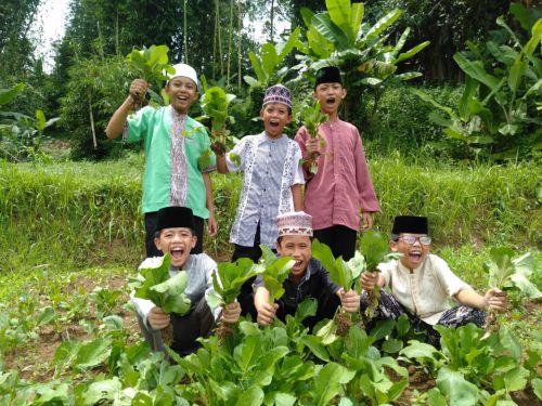 santri al hilal memanen sayuran