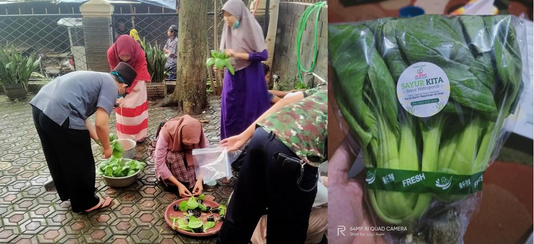 Kebun Sayur Segar Hidroponik Karya Santri Pesantren Al Hilal 3